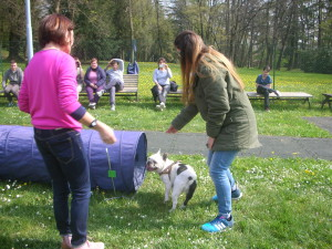 Pet Therapy 7